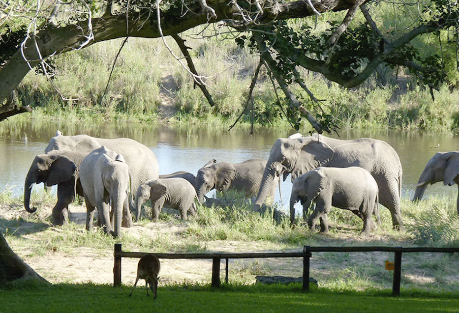 Elephant-walking-past-the-safety-fence-at-the-picnic-spot.